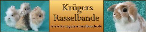 Banner Mittlere Webansicht